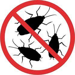 Тараканы как избавиться форум