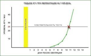 Уровень ХГЧ: показатели, норма, антитела к ХГЧ, ХГЧ при беременности