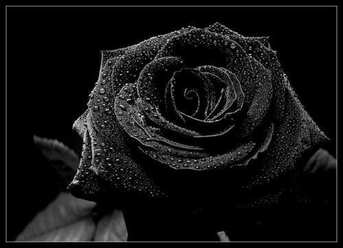 Черный цвета