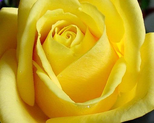 Если нравится жёлтый цвет