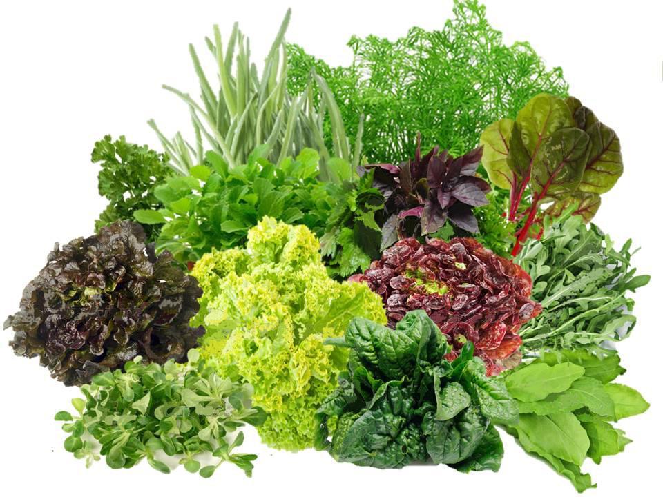 В Хабаровске появится производство салатных культур