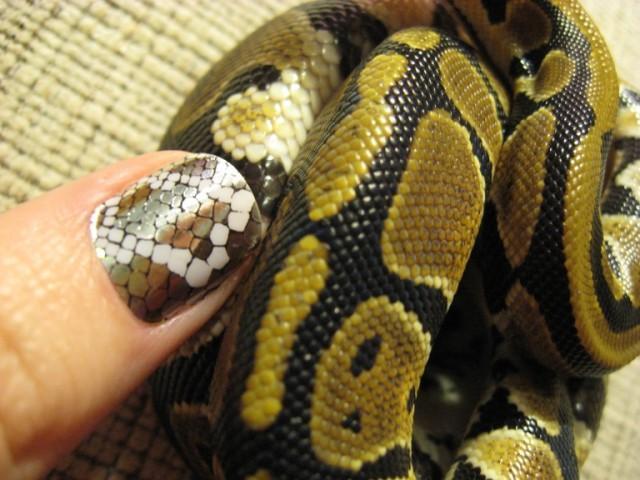 Змеиный маникюр на коротких ногтях