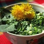 Народные средства для повышения лактации - салат из одуванчиков