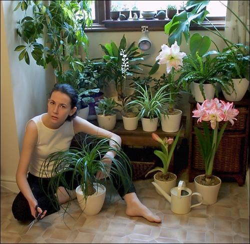 Благоприятные для дома домашние цветы