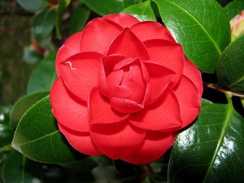 Лучшие цветы для дома: какие цветы лучше выращивать дома