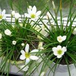Какие цветы хорошо держать дома: список лучших цветов для домашнего очага