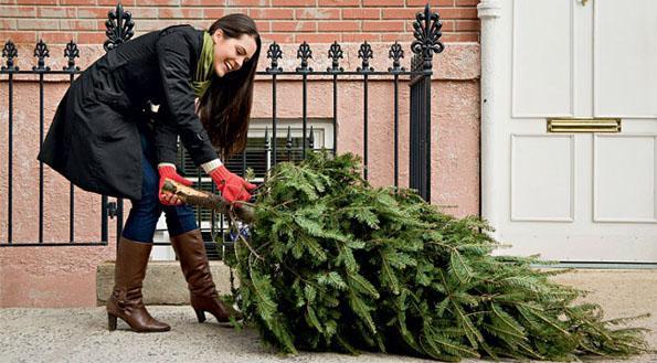 Какая елка лучше к Новому году – искусственная или настоящая