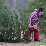 Основные правила выбора и установки живой новогодней елки