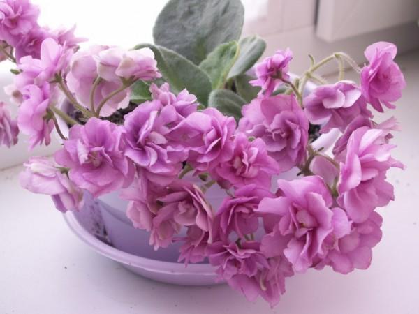 Лучшие цветы для офиса