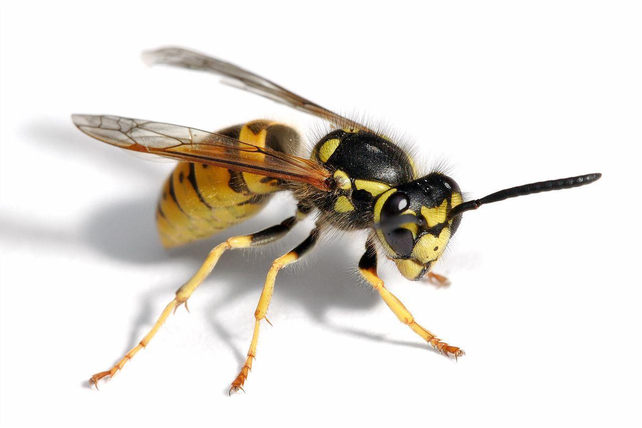 схема укусов пчел