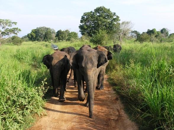 Национальный парк Удавалаве, Шри-Ланка