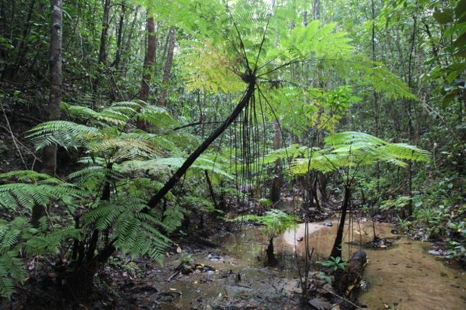 Дождевой лес Коттава, Шри-Ланка