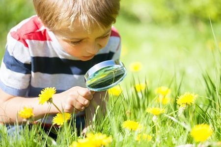 Тематические прогулки с детьми 2-5 лет - изучаем насекомых
