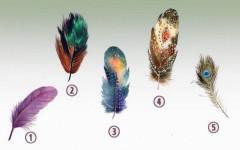 Тест: выберите перо и узнайте, в чём ваша внутренняя сила