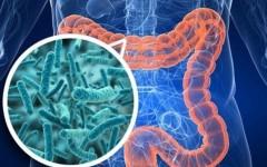 Как заселить кишечник правильными бактериями самостоятельно без дорогих средств из аптеки?