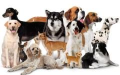 Узнай свой характер по породе собаки