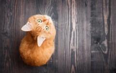10 плюсов кошки в доме