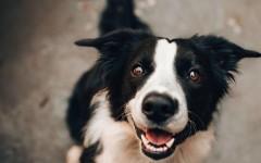 Учёные назвали 3 породы собак, которые могут обладать уникальными способностями к обучению
