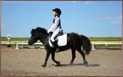 Польза и вред конного спорт для детей и взрослых – где лучше брать уроки конного спорта?
