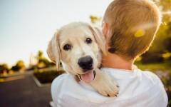 Покупка породистого щенка: где следует искать и у кого ни в коем случае нельзя брать собаку