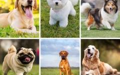 Пройди онлайн-тест «Какая ты собака?»