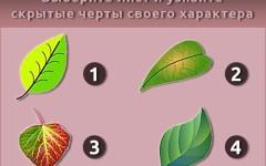 Психологический тест: Выберите лист и узнайте скрытые черты своего характера