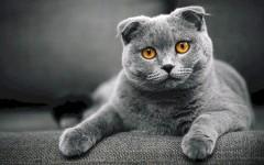 Какая порода кошек подходит вам по знаку зодиака