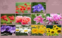 Психологический тест – выберите цветок и узнайте о скрытых качествах своей личности
