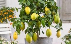 5 растений, которые очистят воздух и энергетику в доме – срочно заводите