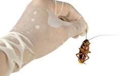 SOS, тараканы в квартире – 13 лучших средств от тараканов
