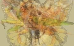 Тест: животное, которое вы увидите первым, раскроет вашу истинную суть и доминирующие качества