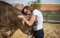Новый тренд в терапии: объятия с дружелюбными коровами