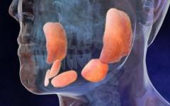 Признаки и симптомы свинки у детей – последствия болезни свинка для девочек и мальчиков