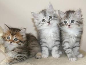 Кошка в доме – как правильно воспитать домашнего любимца