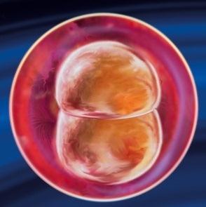 Плод 2 неделя беременности -фото
