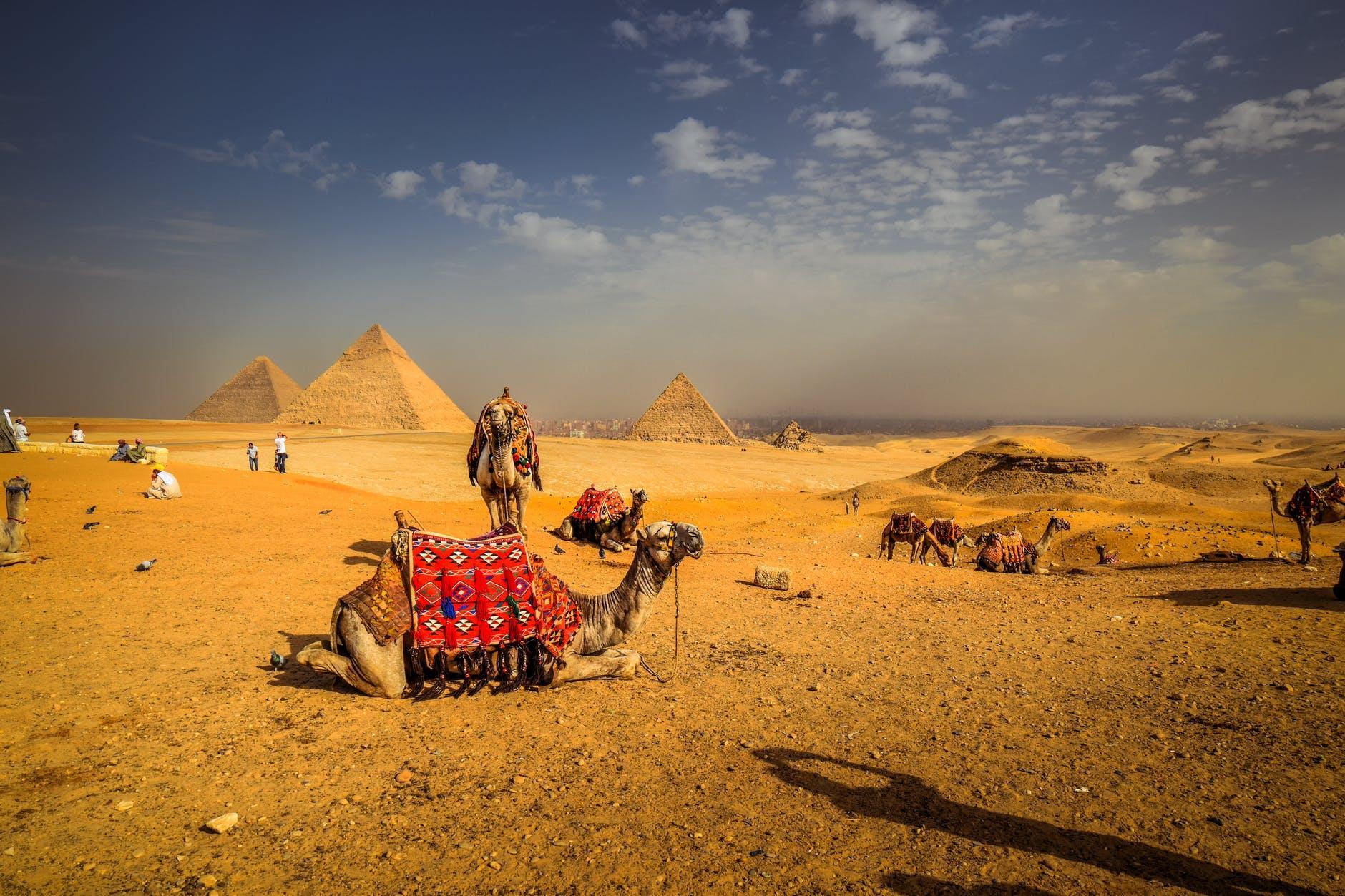 египет верблюды