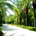 Абхазия в начале июня