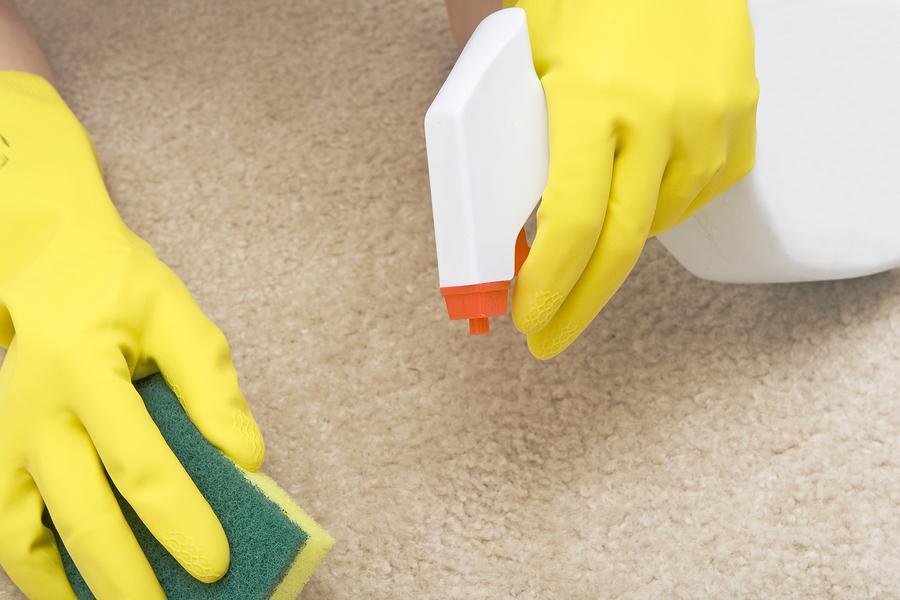 Средства от запаха кошачьей мочи для уборки квартиры