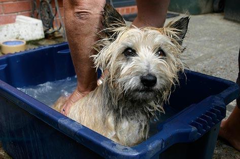 Собака плохо пахнет - как избавиться от запаха псины?