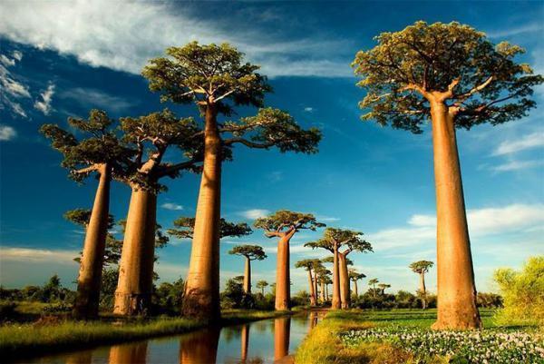 Мадагаскар - Морондава