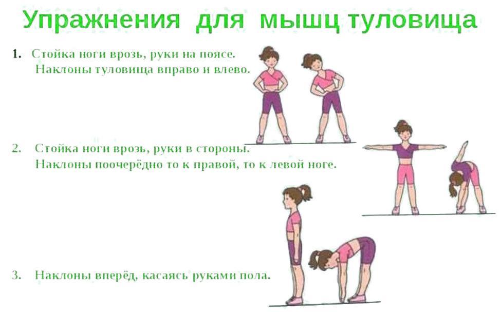 Упражнения для мышц туловища