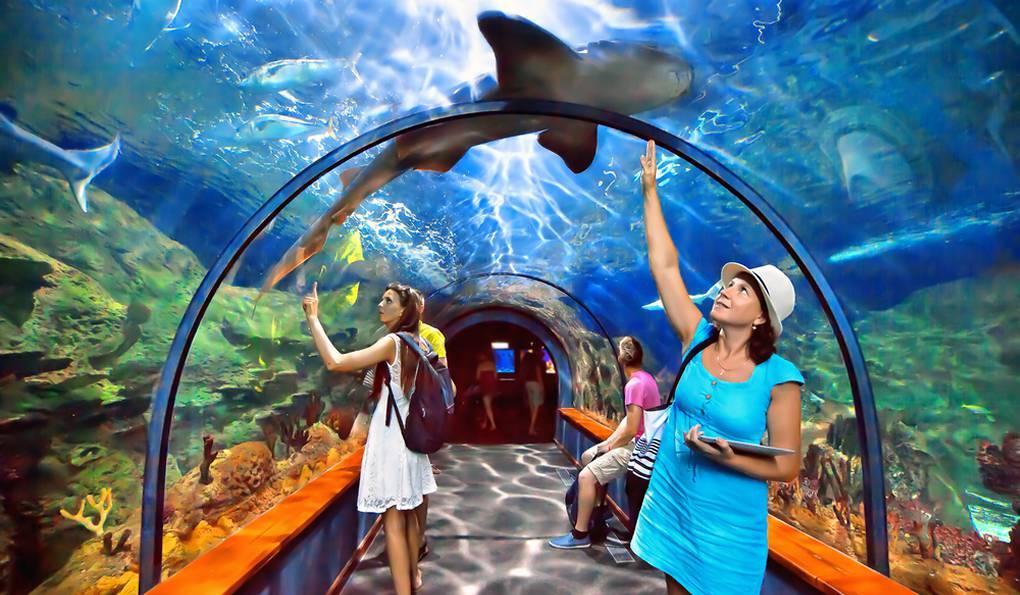 Зоопарк Лоро Парк (Loro Parque) в Пуэрто-де-ла-Крус, Тенерифе