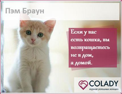 Кошки в доме - плюсы