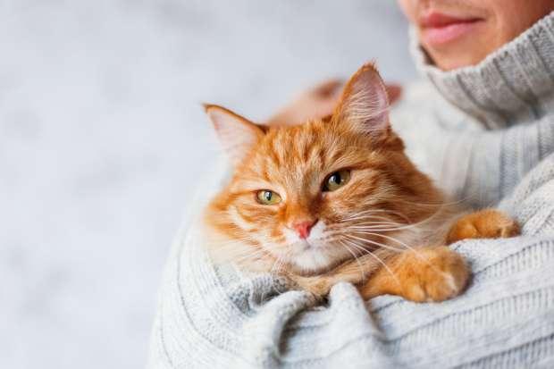 Кошки улучшают здоровье - факт