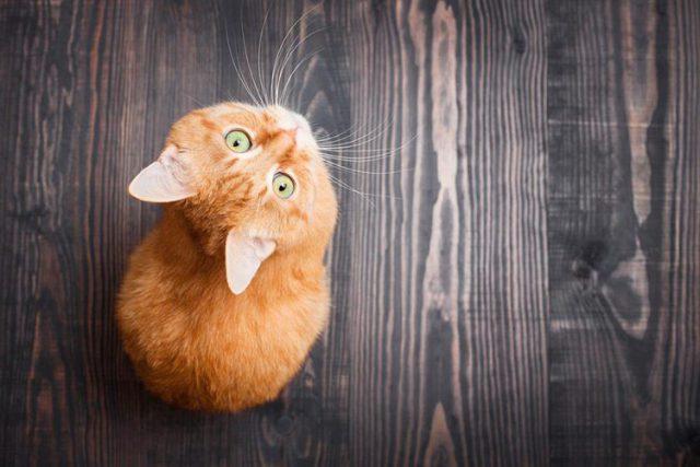 Несомненные плюсы кошек в доме или квартире - минусов нет!