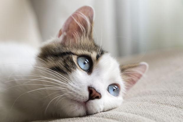 У кошек развита интуиция