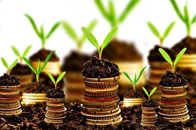 Деньги надо выращивать