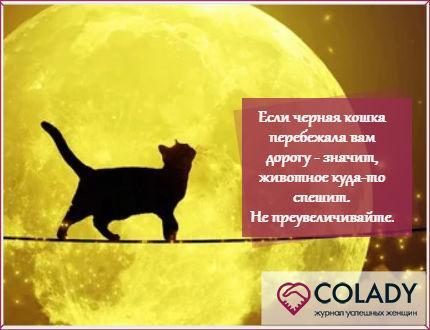 Приметы о черной кошке