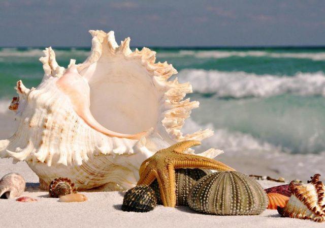 Ракушки с моря