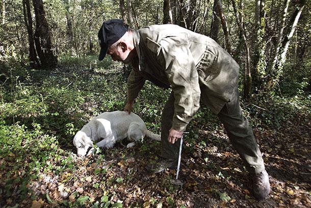 Хорватия, Охота на трюфели в Истрии